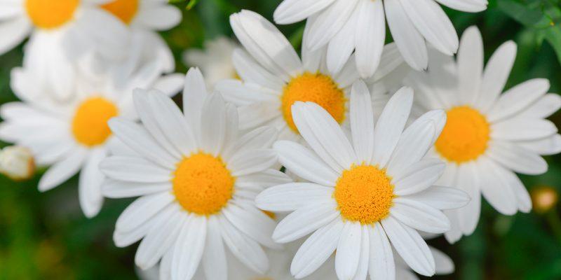 La Dea Clori e il Vento Zefiro: aspettiamo insieme la primavera