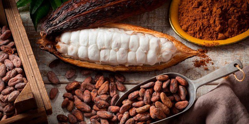 Le origini del cacao e la ricetta de La Tana del Coniglio